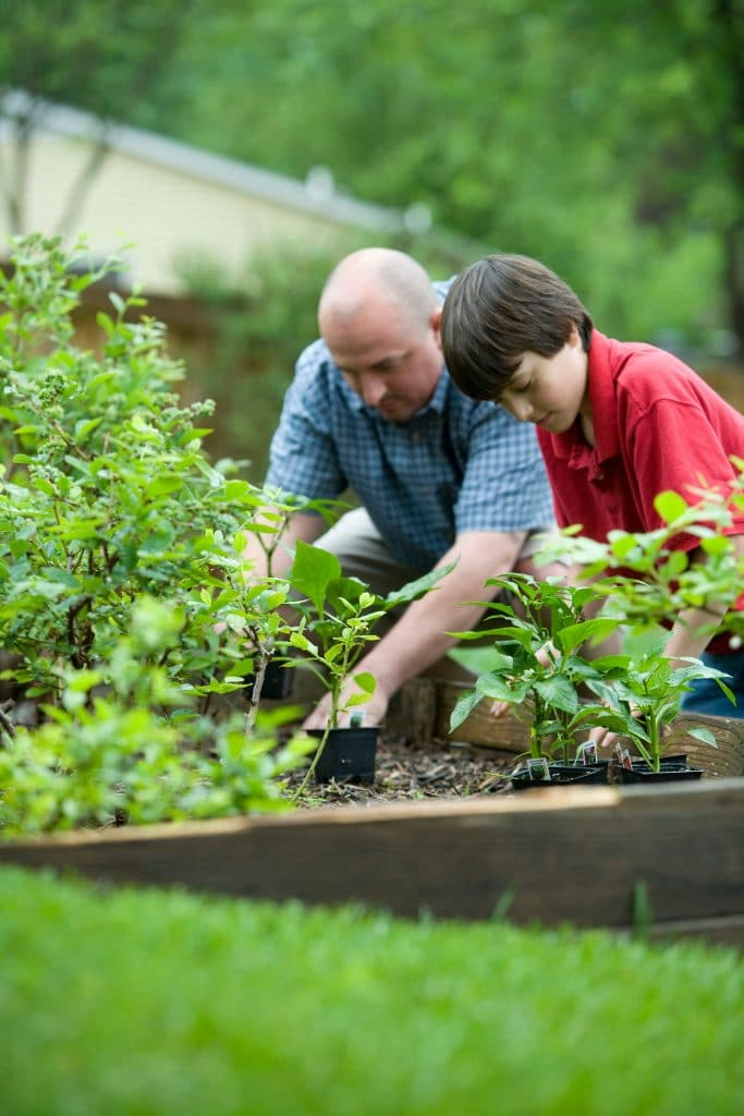 Gardening and Plant Care 101
