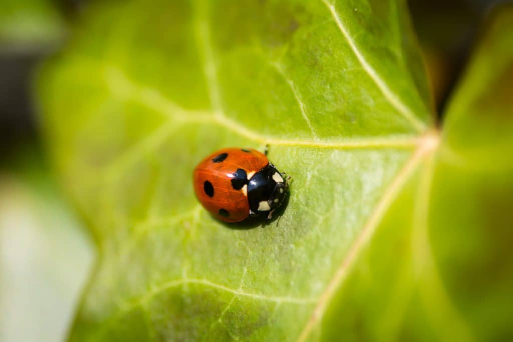 Getting Rid of Pests and Plant Disease